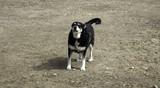 Funny attentive dog - 207525804