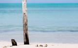 dry post on Cuban beach