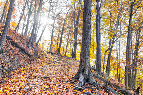 Fotobehang Betoverde Bos Empty hiking trail through colorful orange foliage fall autumn forest with many leaves on path in Harper's Ferry, West Virginia, sun behind sunburst trees, fallen leaf