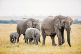 Elephants in Africa - 207536294