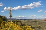 Saguaro cactus and wildflowers in desert preserve in North Scottsdale, Arizona. - 207544202