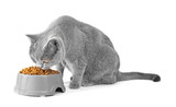 A cat on a white background eats food from a bowl