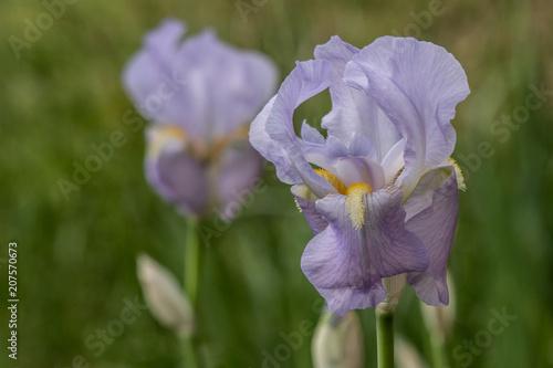 Aluminium Iris Country Iris