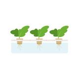 Hydroponics plants vector isolated illustration - 207588234