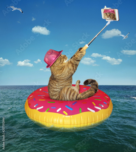 The cat in pink hat makes a selfie on the inflatable circle in the sea.