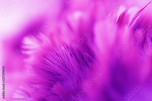 Bird and chickens feather texture for background Abstract,blur style and soft color of art design. - 207594039