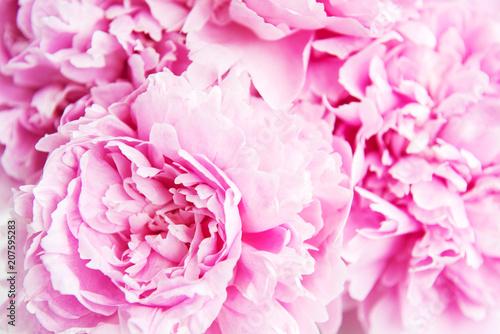 Beauty pink peony flowers - 207595283