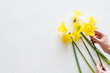 yellow narcissus on white background. beautiful spring flower bouquet. hands creating floral composition. copy space concept