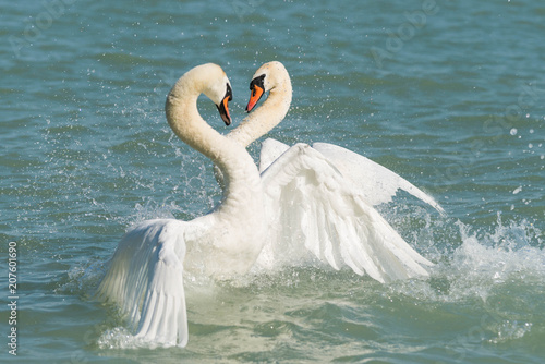 Aluminium Zwaan beautiful white swan
