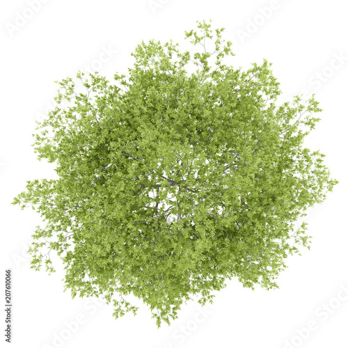 top view of peach tree isolated on white background - 207610066