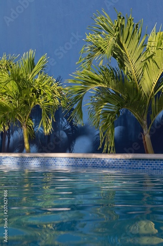Swimming pool with palmtrees. Tropics