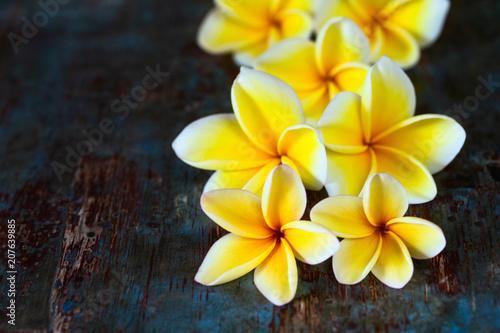 Fotobehang Plumeria Yellow frangipani plumeria flowers on dark blue wooden table.