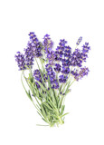 Lavender flower bunch isolated white background - 207643202
