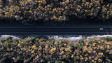 Aerial Forest Road in Autumn