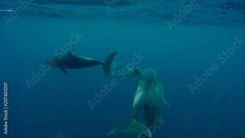 Aluminium Dolfijn Galapagos trip