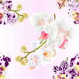 Seamless texture stems with flowers and  buds beautiful  Orchid Phalaenopsis spotted  and white   closeup  vintage  vector editable illustration hand draw
