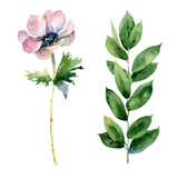 Set with anemone flower and green branch - 207668678