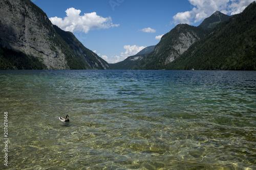 Canvas Khaki Koenigssee national park, bavaria, germany, europe