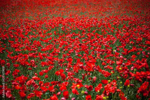 Fotobehang Rood traf. poppies field