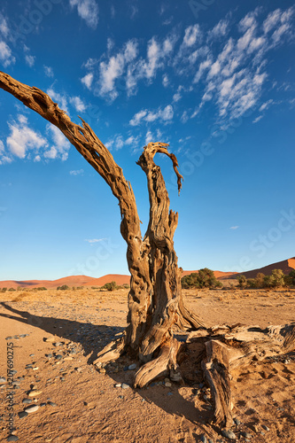 Fotobehang Blauwe jeans Dead tree in the desert.