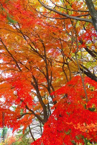 Fotobehang Baksteen 紅葉の公園の風景47