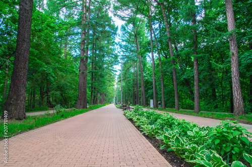 Aluminium Groene Awesome long walking alley in the summer. Cobbled road (paving slabs) among the dense fairy forest in the city park, perspective.