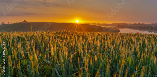 Fotobehang Lente sunrise over the spring field of young grain