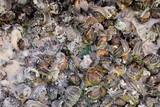 Edible snail escargot - 207711209