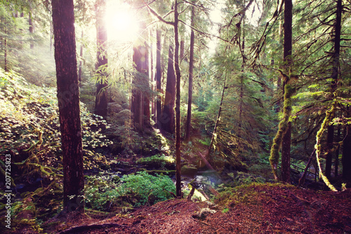 Fotobehang Galyna A. Sunny forest