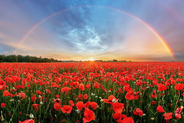 Rainbow Landscape over poppy field