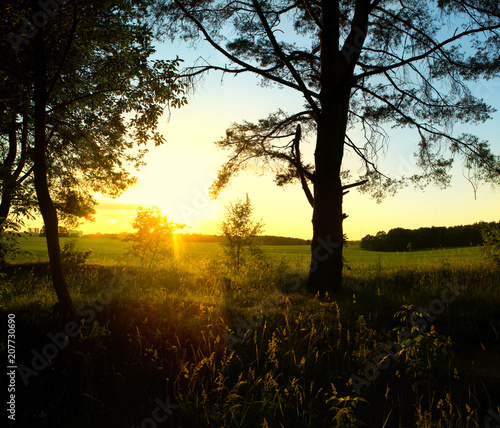 Fotobehang Zonsopgang Sunrise in the forest. Beautiful summer landscape