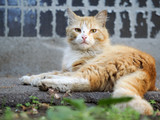 Dirty homeless redhead cat house wall. The problem of stray animals - 207731603