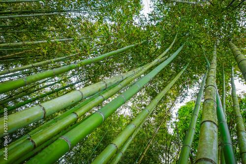 Canvas Bamboe Arashiyama bamboo forest, Kyoto, Japan
