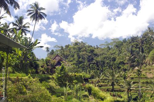 Plexiglas Bali Rice terrace in Bali