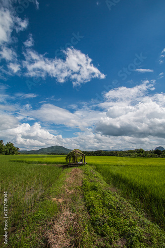 Fotobehang Lente shack in farm