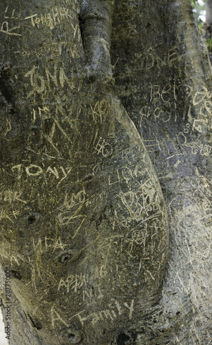 Fotobehang Graffiti Tree in temple garden with graffiti from visitors Asia