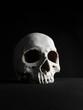 portrait of a human skull, photographed on black studio background.