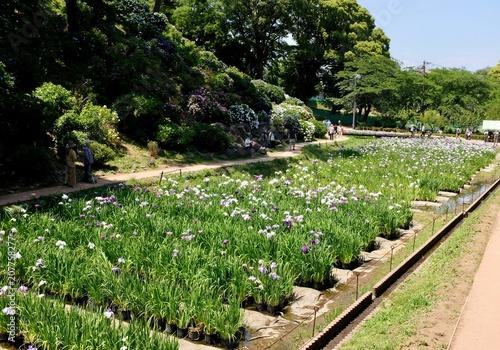 Aluminium Iris 菖蒲園