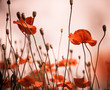 red poppies at summer meadow abstract background