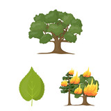 Forest and nature cartoon icons in set collection for design. Forest life vector symbol stock web illustration. - 207763814