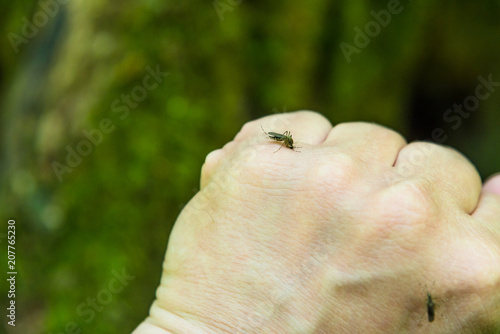Mosquito on the man's hand - 207765230
