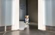 Leinwanddruck Bild - Cute dog at home. Puppy jack russell terrier
