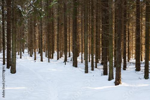 Aluminium Weg in bos Winter spruce forest in Finland