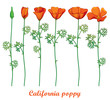 Vector set with outline orange California poppy flower or California sunlight or Eschscholzia, green leaf and bud isolated on white background. Contour ornate poppies for summer design.