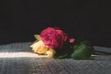 Beautiful Roses 5 - 207803289