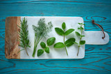 Aromatic herbs culinary plants rosemary fennel - 207804800
