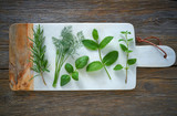 Aromatic herbs culinary plants rosemary fennel - 207804811