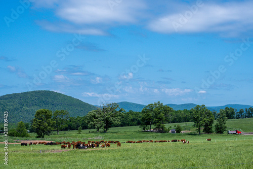 Fotobehang Blauw Panoramic view of a country land with herd of beef