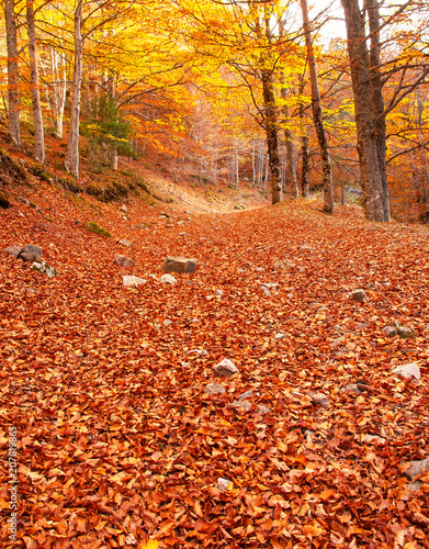 Nice autumnal scene in the forest - 207819865