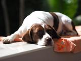 Dog lying sunbathing